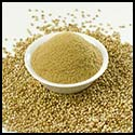 CORIANDER POWDER DEALER